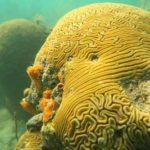 snorkel-gandoca