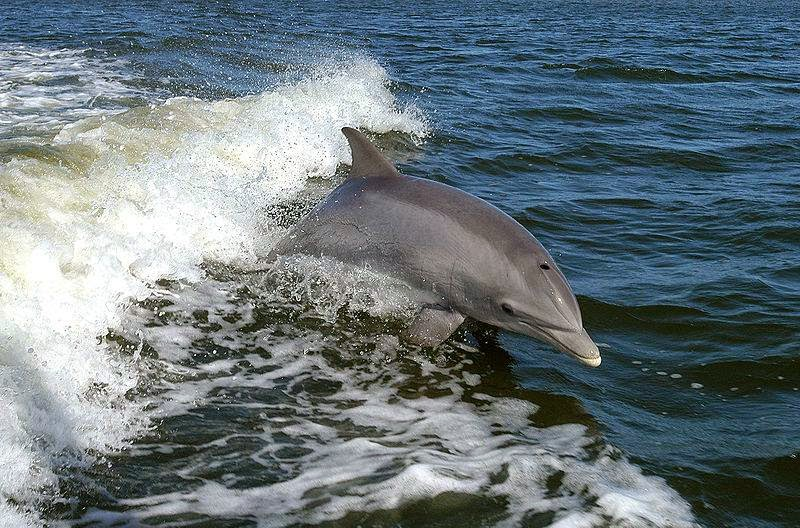 delfines puerto viejo