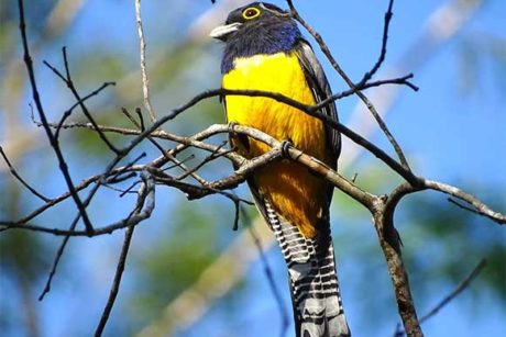 Observacion-aves-manzanillo
