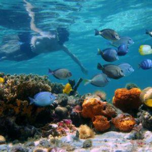 Snorkel-parque-cahuita