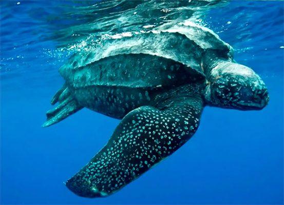 Spawning-turtles
