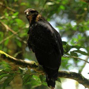 birdwatching-costa-rica