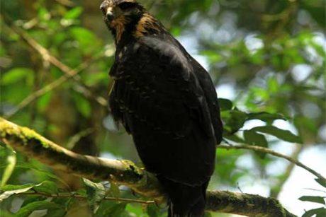 Avistamiento-Aves