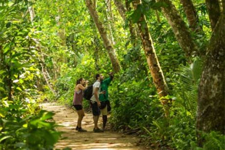 Caminata-Parque-Cahuita