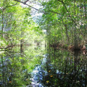 Mangroves Gandoca