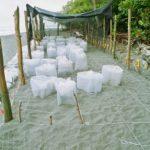 voluntariado-con-tortugas-marinas