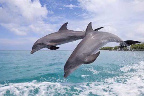Bahia-delfines-Bocas-del-toro